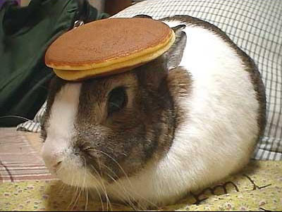 Bunny%20with%20a%20pancake%20on%20its%20